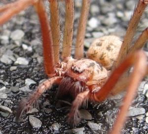 House spider 2012