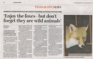 Enjoy the foxes - Sheffield Telegraph