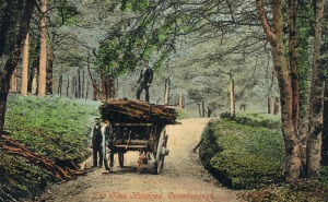 Carting the coppice, Crowborough, early 1900s