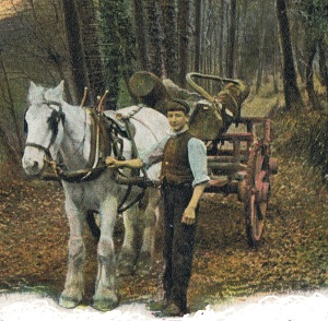 Carting the logs 1906