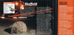 Sheffield urban wildlife feature in BBC Wildlife Magazine Nov 2014