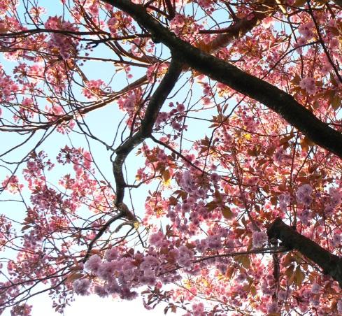 Blossom time at Norton