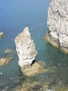 Flamborough Head Ian Rotherham 3A