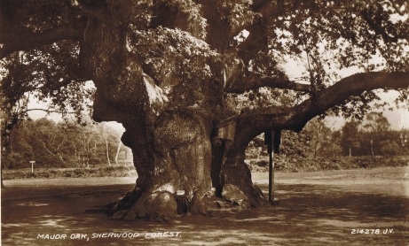 Chapter 4 Plate 2 a) The Major Oak 1940s