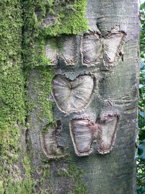 Initals and heart carved into a tree at Honiton in Devon photographed by Ian Rotherham