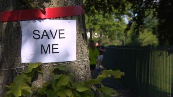_88207153_tree