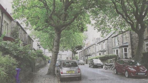 commemorative-trees-on-western-road-sheffield